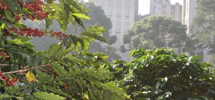 Aniversário de São Paulo: Cafezal urbano e zoológico de insetos fazem parte das atrações da cidade