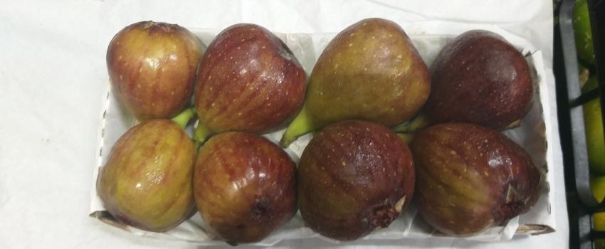 Secretaria de Agricultura e Abastecimento transfere técnicas de manejo para o cultivo de figo e goiaba